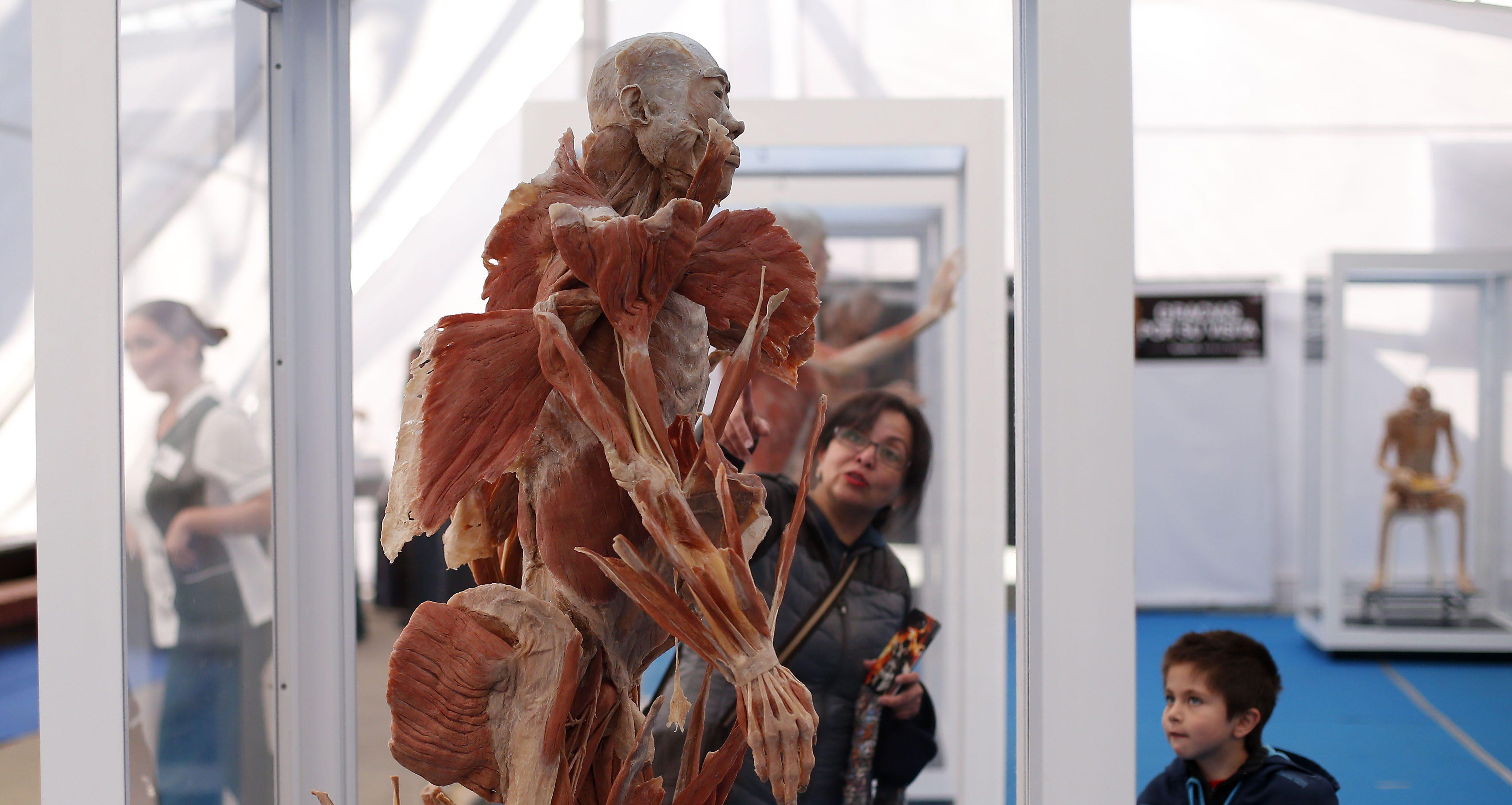 Bodies llega a Santiago con cuerpos humanos reales